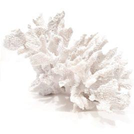 Koralowiec Biały rozm M 2 model